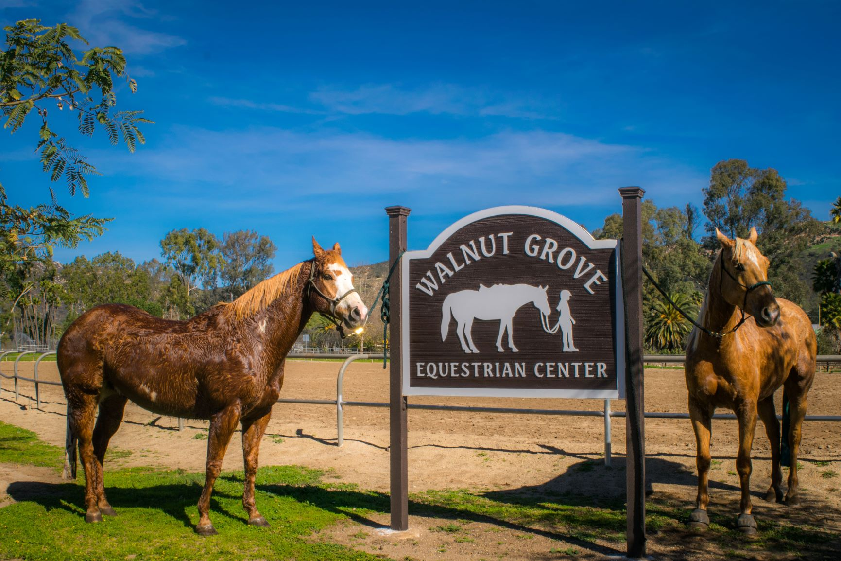 Walnut Grove Equestrian Center by Nicki James